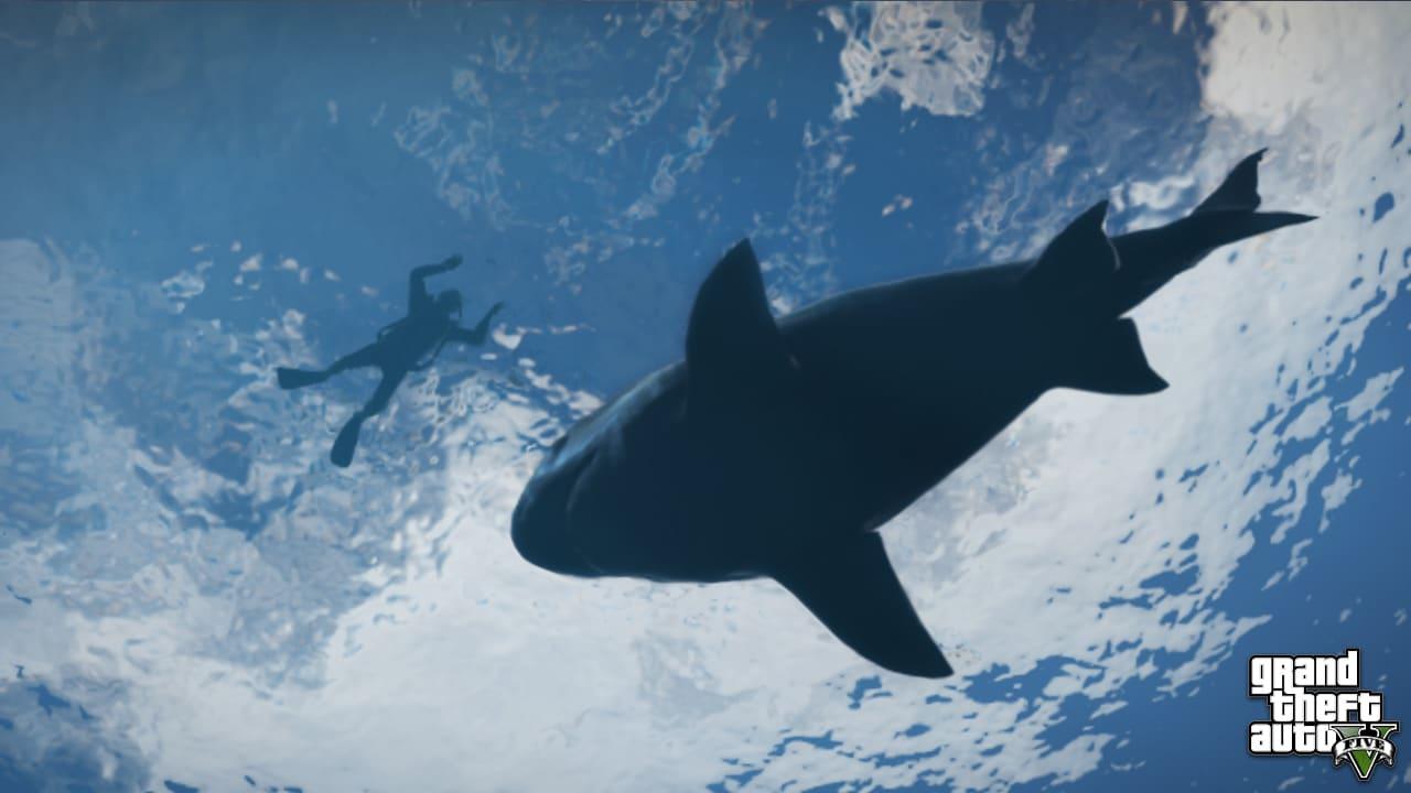 Des requins...