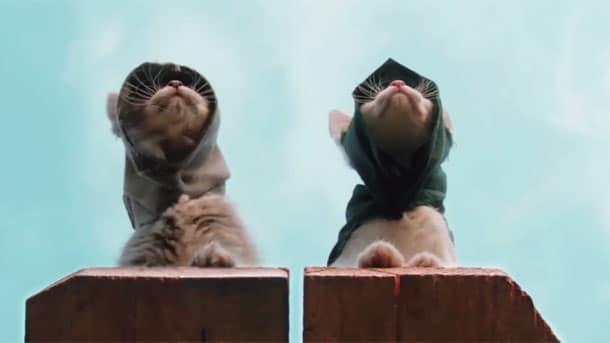Assassins-Kittens-Unity
