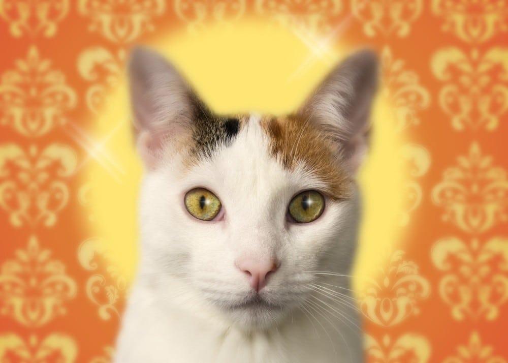 clementine-adopte-un-creatif-petite-lampe-de-poche